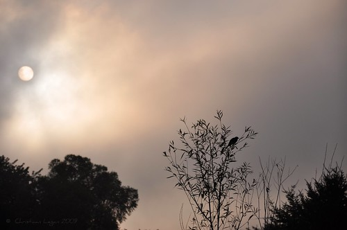 morning light shadow cloud sun mist tree silhouette fog illinois disc redwingedblackbird blackwillow woodhavenlakes