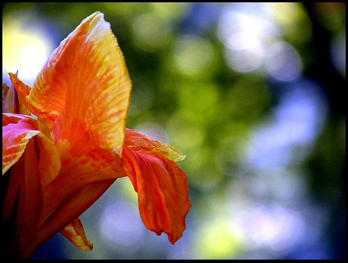 blue orange flower green nature yellow circle photography nikon bokeh circles coolpix wa bellevue coolpic sharma upma p80 upmasharma