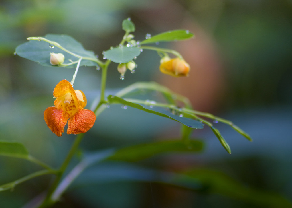 Orange Beauty by David Hopkins Photography
