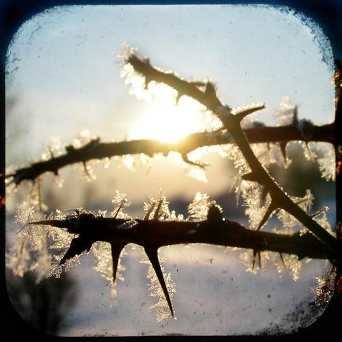 morning blue winter sky sun snow sunrise frost ghost thorns flea the naturesfinest theghostofaflea theperfectphotographer kensai76