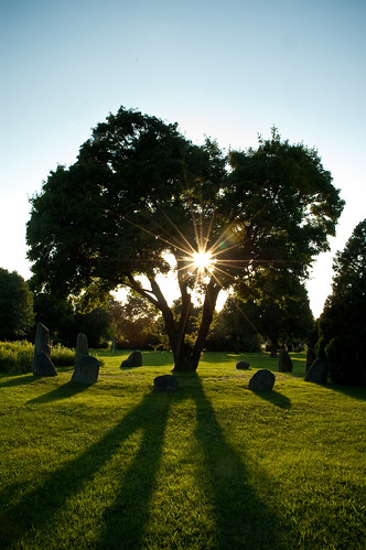 Sunset at Zentralfriedhof