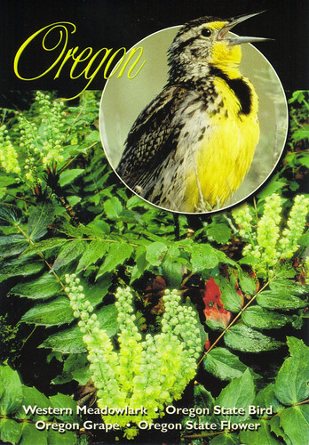 Oregon State Bird & Flower Postcard | US-US Traveling ...