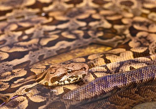 Python   by wwarby