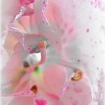 pink spotted azalea