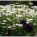110514 flowers02