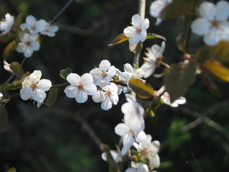 Finally spring.  Окончательно весна.IMG_1646