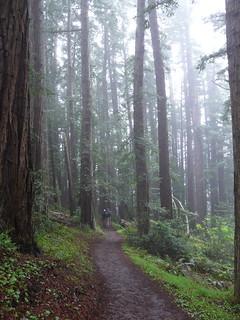 Hazy Dipsea Trail
