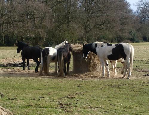 Horses Knockholt Circular