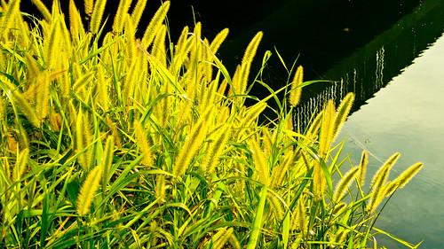 green nuvali