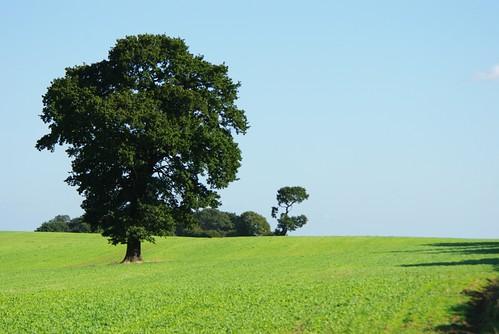 Ria's Tree Etchinghill 10-09-09 IMGP2529