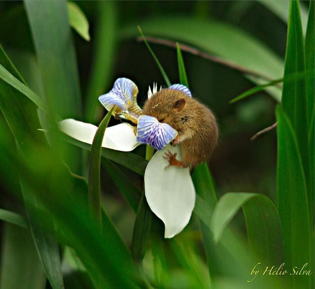 Estranho beija-flor / Weird humming bird