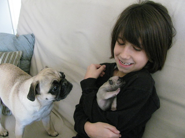 The Pug Puppies