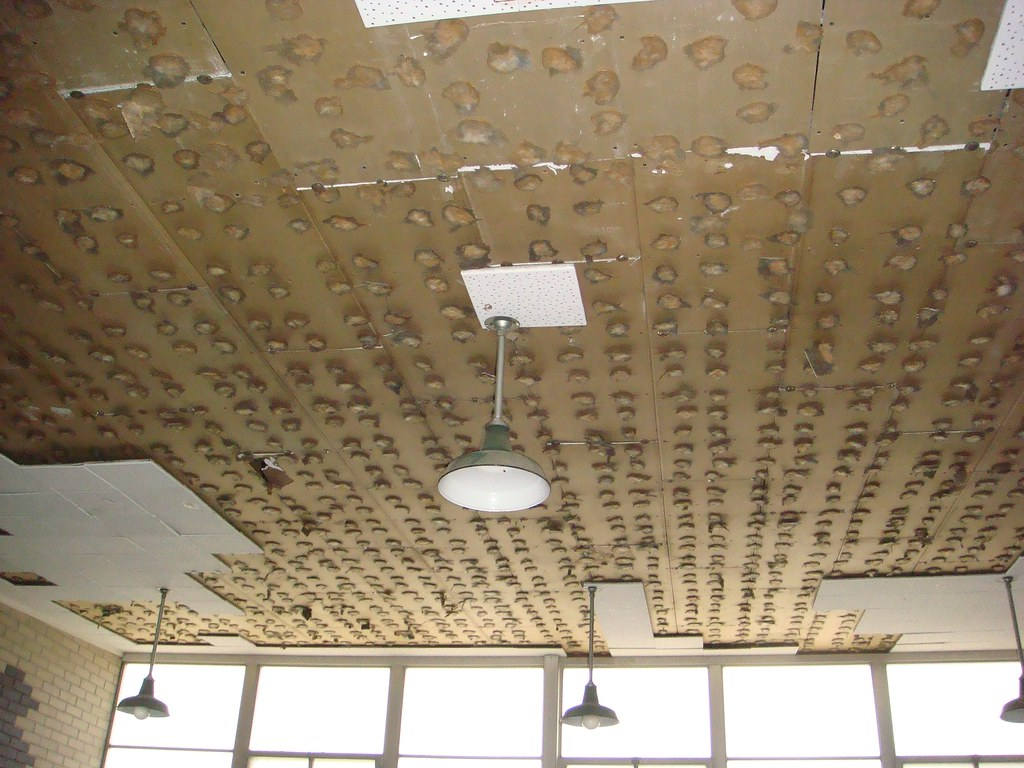 Asbestos Ceiling Tile Adhesive Excessive Moisture Build Up