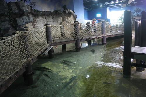 aquarium aquariums atlantismarineworldaquarium