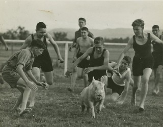 Chasing a pig at Gatton College