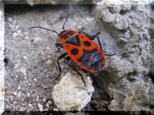My first insect photo
