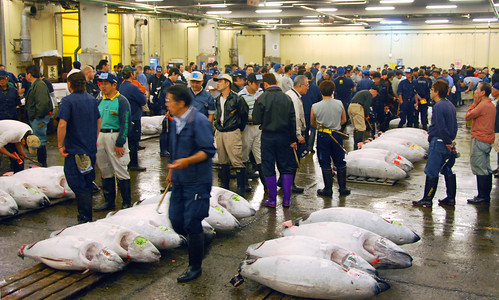 the tuna auction, tsukiji fish market | by hopemeng