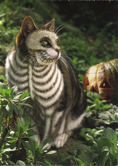 Skeleton Painted Cat Postcard
