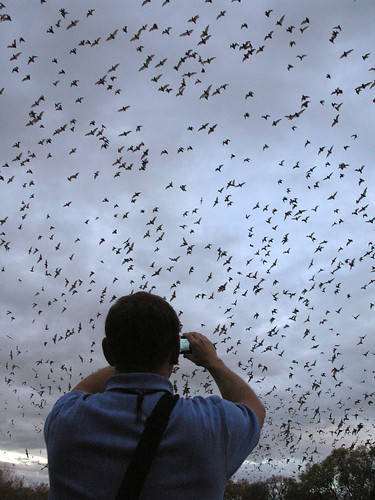 Shooting video with phone - Bracken Cave Bats | by Jon_Marshall