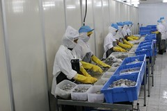 Shrimp processors | by East Asia & Pacific on the rise - Blog