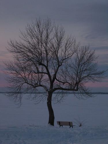 winter sky lake snow ontario canada tree ice sunrise bench interestingness solitude branches explore kingston lakeontario intersetingness