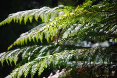 Kauri Forest, New Zealand | by Heike_Quosdorf