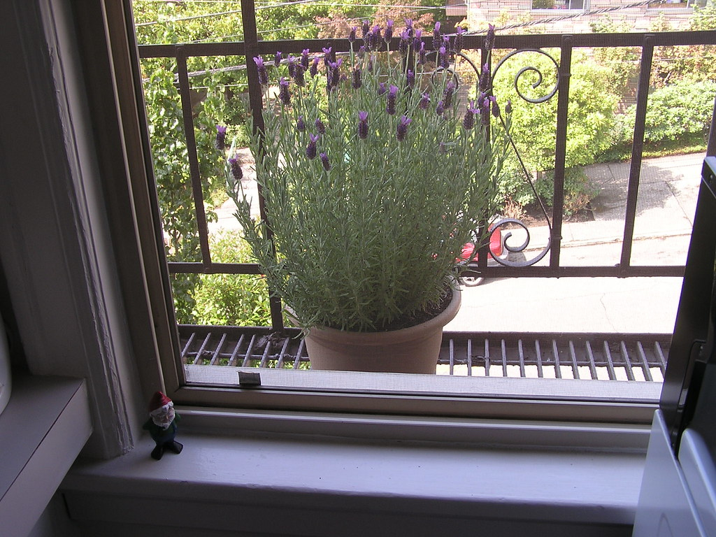 lavender on the fire escape