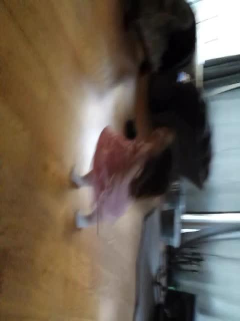 roxy dancing to janis