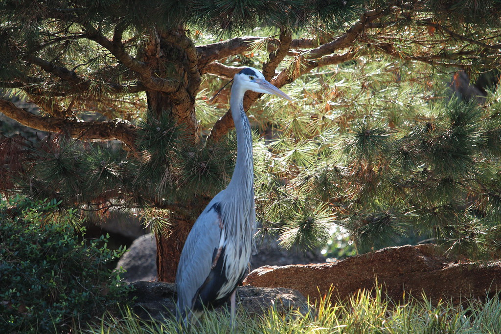 GBH Japanese Garden Ft Worth TX