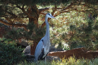 GBH Japanese Garden Ft Worth TX | by johnd1964