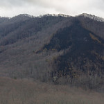 Burned woods, Smoky Mountains