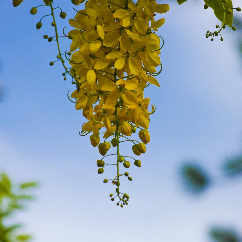 Bunch of yellow flowers   Cacho de flores amarelas   Flickr