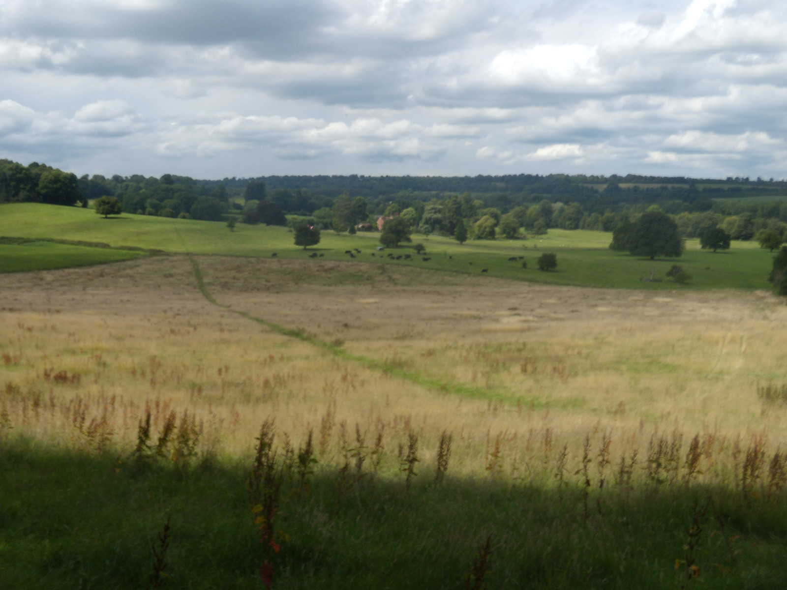 Path Wanborough to Godalming