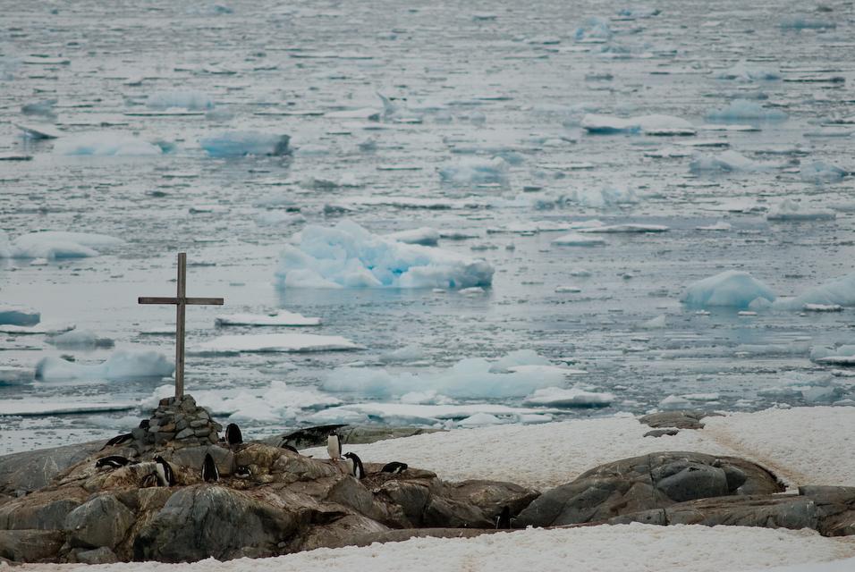 Praying for Penguins