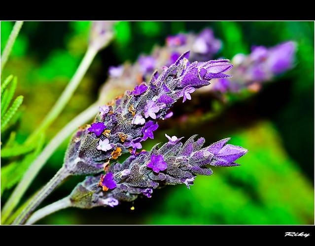 Violeta y Verde - Violet & Green