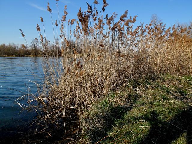 Illkirch - Lac Achard