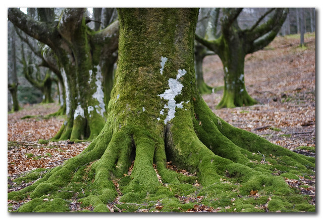 Great green roots