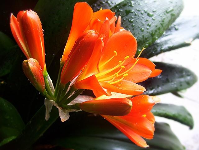 ~01-02-2006 Winter Blooms #9~
