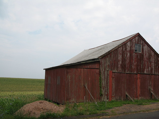 Wallingford barn and corn field