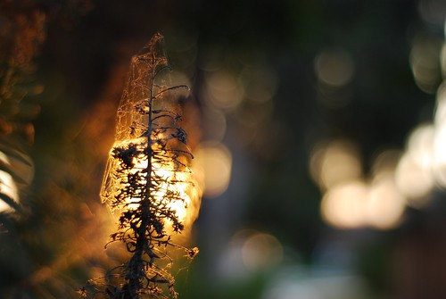 sunset flower weeds explore skeletal nikkor50mm18 sooc nikond80