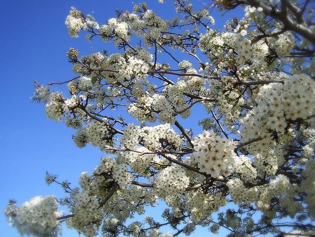 ~01-02-2006 Winter Blooms #1~