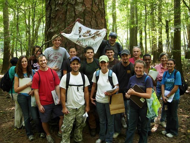 taxonomy class, big pine