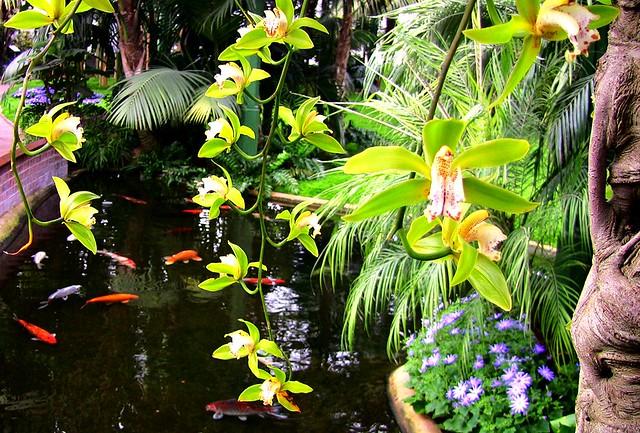Orchideen/Kahnlippe mit Fischteich