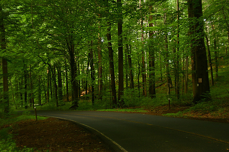 rid creek park woods
