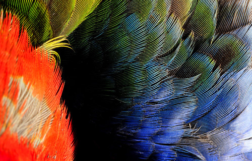 Dead Rosella 3 - Enter the void | by beeater