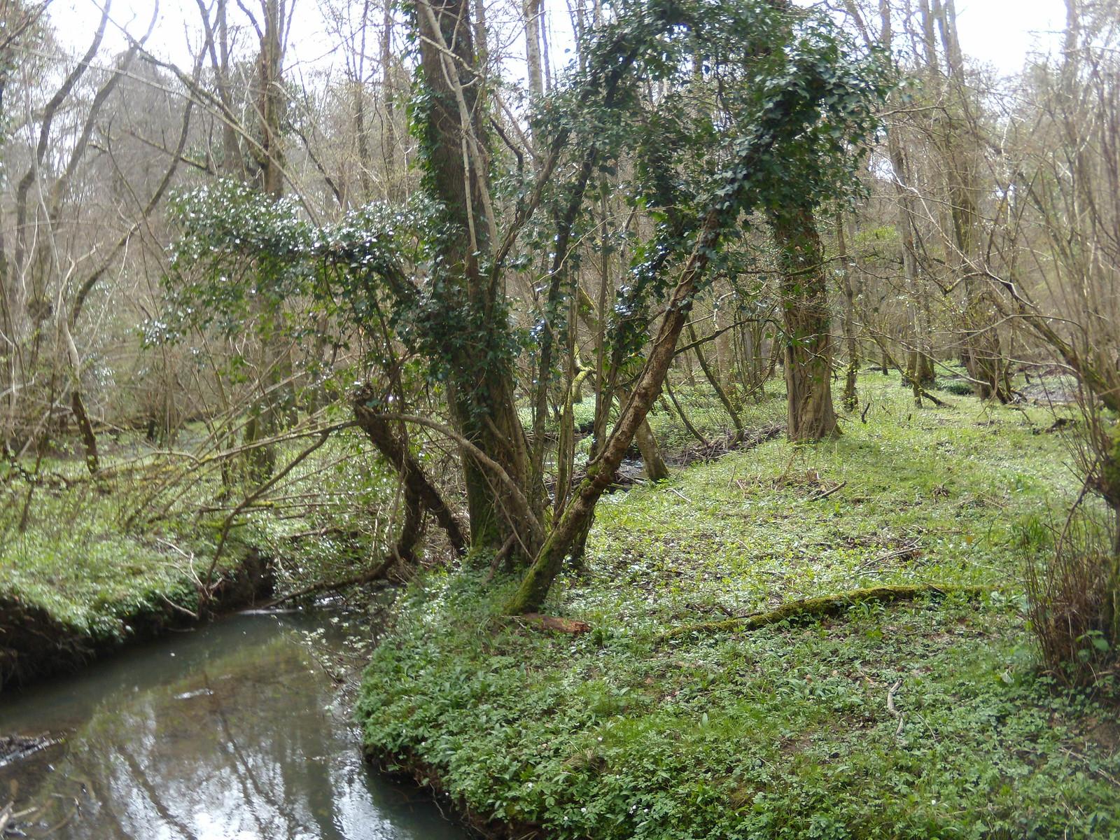 Green scene Balcombe to East Grinstead