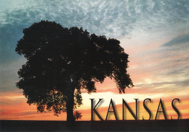 Kansas Cottonwood State Tree Postcard