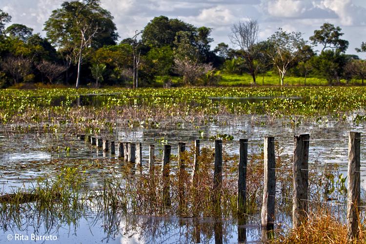 Cheia no Pantanal