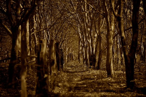 trees sepia forest geotagged costarica