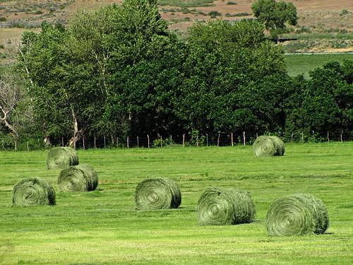 rural colorado agriculture haybales rotoballe montrosecolorado